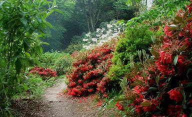 large_Achamore_Gigha_garden_visit